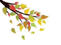 Fall Leaves on Branch Royalty Free Stock Photography