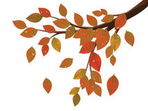 Fall Leaves on Branch Stock Images