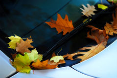 Fall leaves on a car Royalty Free Stock Photography