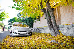 Fall leaves on a car Stock Images