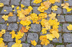 Fall leaves on cobblestone Stock Image