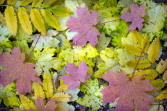 Fall Leaves. Cold color backgrounds stock image