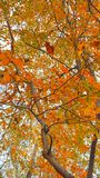 Fall leaves. Colorful Royalty Free Stock Photos