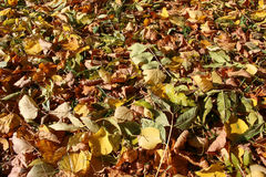 FALL LEAVES. Colorful fall leaves background Stock Photography
