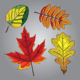 Fall leaves Royalty Free Stock Photography