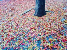 Fall leaves. Colors of fall Royalty Free Stock Images