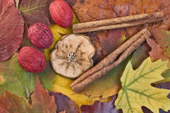 Fall leaves and colors. Collection of colorful Fall leaves and colors Royalty Free Stock Photo