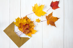 Fall leaves coming out from envelope Stock Photos