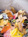 Fall leaves. In compost bag Royalty Free Stock Photo
