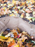 Fall leaves. In compostable bag Stock Image