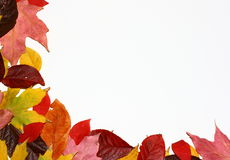 Fall Leaves Corner. A collection of fall leaves fill the corner of a white background