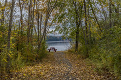 Fall Leaves Cover a Pathway Leading to a River. Fall leaves cover a pathway that lead to the Penobscot River in Hampden, Maine, where a lonely picnic table Royalty Free Stock Images