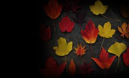Fall leaves on dark background royalty free stock image