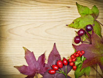Fall leaves decoration Stock Images