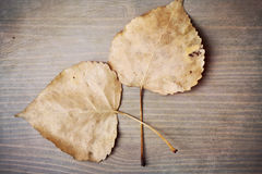 Fall Leaves. Dried fall leaves on a wood background Royalty Free Stock Image