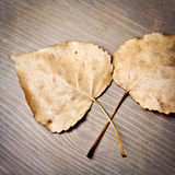 Fall Leaves. Dried fall leaves on a wood background Royalty Free Stock Photography