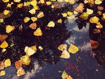 Fall leaves, reflection in a puddle. The fallen-down autumn leaves Stock Photos