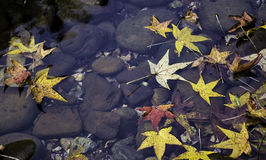 Fall Leaves Floating on Creek Royalty Free Stock Images