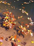 Fall leaves floating. In creek at Red River Gorge, Kentucky Royalty Free Stock Image