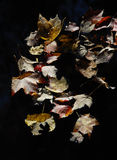 Fall Leaves Floating on Water Stock Photography