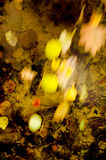 Fall leaves flowing on water Royalty Free Stock Image