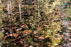 Fall leaves and foliage trees reflections over mountain lake water background. Fall leaves with trees pines and foliage reflections over mountain lake water stock images