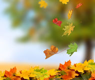 Fall leaves in forest Stock Photography