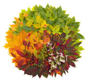 Fall leaves royalty free stock photo