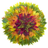 Fall leaves. Leaves forming a colorful circle pattern Royalty Free Stock Photo