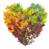 Fall leaves. Leaves forming a colorful heart shape Royalty Free Stock Photos