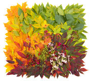 Fall leaves. Leaves forming a colorful square pattern Stock Photography