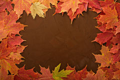 Fall leaves frame on brown background royalty free stock images