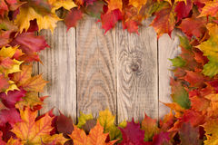 Fall leaves frame. Colorful fall leaves frame on wooden background