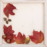 Fall leaves frame Royalty Free Stock Photography