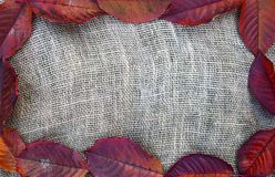 Fall leaves frame. On the rustic burlap background Stock Images
