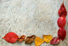 Fall leaves frame on grey. A colorful fall leaves frame on a gray stony floor Stock Images