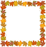 Fall leaves frame Stock Photos