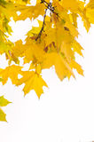 Fall leaves frame isolated on white Stock Image
