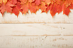 Fall leaves frame on whooden background. Fall leaves frame on distressed white wooden background Stock Photos