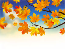 Fall leaves in front of blue sky with clouds. Royalty Free Stock Image