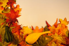 Fall Leaves with Gourds. On a cream colored background stock photography