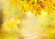 Fall leaves with green grass Royalty Free Stock Image