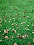 Fall leaves on green lawn Royalty Free Stock Image