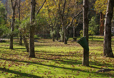 Fall leaves and green lawns north india Stock Photo