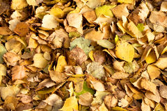 Fall leaves on the ground Royalty Free Stock Images