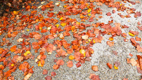 Fall leaves on ground Stock Photography