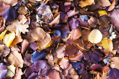 Colorful Kaleidoscopic mixture of fall leaves covering the ground Royalty Free Stock Photography