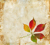 Fall Leaves on a grunge background Royalty Free Stock Images