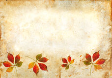 Fall Leaves on a grunge background Stock Photos