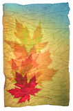 Fall leaves grunge paper Royalty Free Stock Photo
